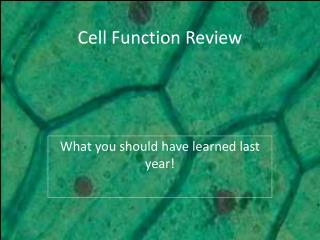 Cell Function Review