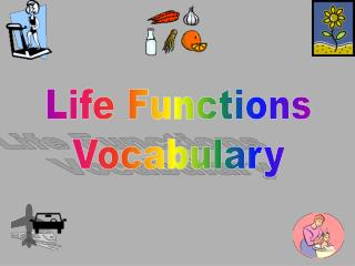 Life Functions Vocabulary