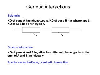 Genetic interactions