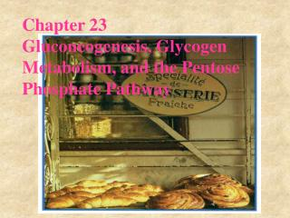 Chapter 23 Gluconeogenesis, Glycogen Metabolism, and the Pentose Phosphate Pathway