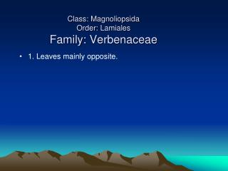 Class:  Magnoliopsida Order:  Lamiales Family:  Verbenaceae