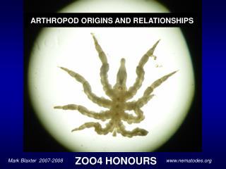 ZOO4 HONOURS