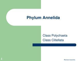 Phylum Annelida