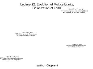 Lecture 22.  Evolution of Multicellularity, Colonization of Land.