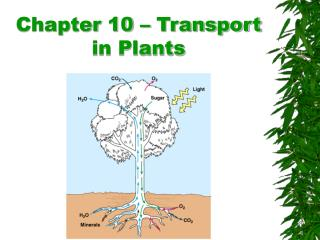 Chapter 10   Transport in Plants
