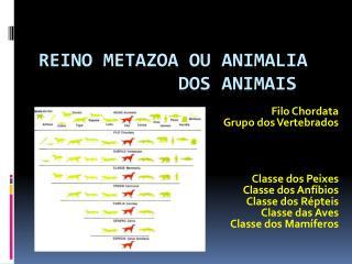 Reino Metazoa ou  Animalia              dos Animais