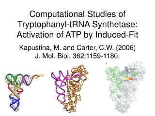 Computational Studies of Tryptophanyl-tRNA Synthetase: Activation of ATP by Induced-Fit