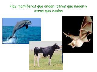 Hay mamíferos que andan, otros que nadan y otros que vuelan