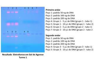 Primeiro andar Poço  1: padrão  50 ng  de DNA Poço 2: padrão  100  ng  de DNA
