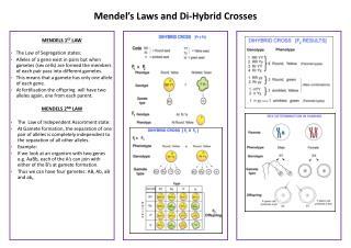 Mendel's Laws and Di-Hybrid Crosses