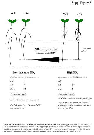 Suppl Figure 5