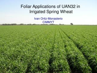 Foliar Applications of UAN32 in  Irrigated Spring Wheat