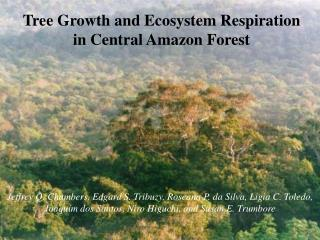 Tree Growth and Ecosystem Respiration in Central Amazon Forest