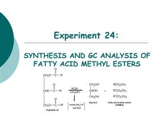 Experiment 24: