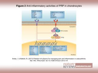 Figure 2  Anti-inflammatory activities of PRP in chondrocytes