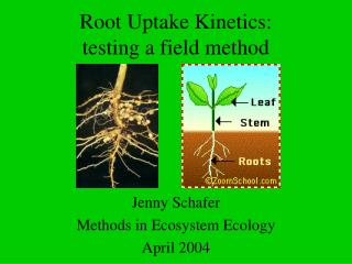 Root Uptake Kinetics: testing a field method