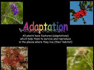 All plants have features (adaptations)  which help them to survive and reproduce