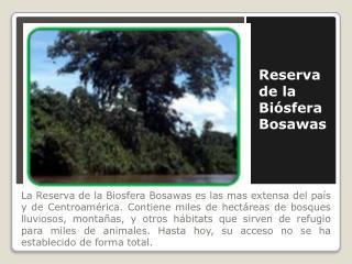 Reserva de la  Biósfera  Bosawas