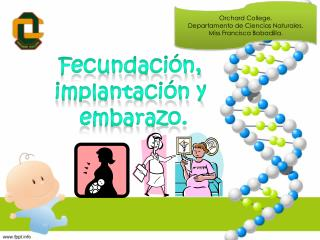 Fecundación, implantación  y  embarazo.