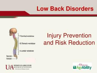 Low Back Disorders