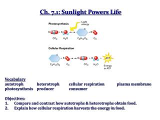 Ch. 7.1: Sunlight Powers Life