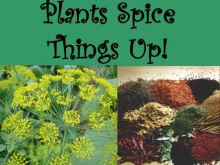 Plants Spice Things Up!
