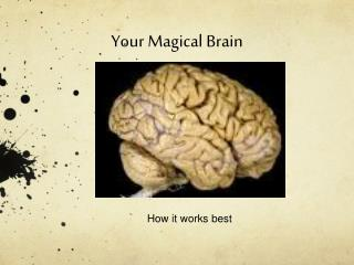 Your Magical Brain