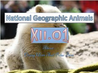 About : OrangUtan  And Polar Bear