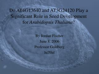 Do AT4G13640 and AT3G24120 Play a Significant Role in Seed Development for  Arabidopsis Thaliana ?