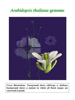 Arabidopsis thaliana genome