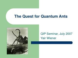 The Quest for Quantum Ants
