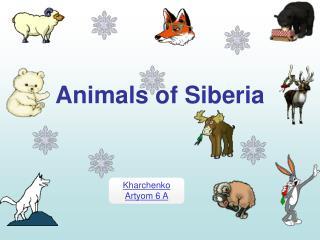 Animals of Siberia