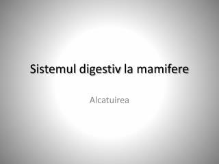 Sistemul digestiv  la  mamifere