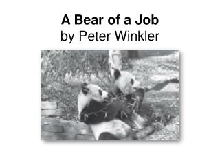 A Bear of a Job by Peter Winkler