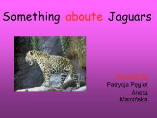 Something aboute Jaguars