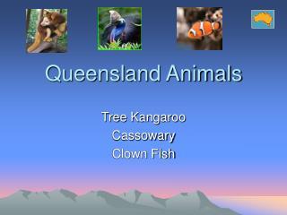 Queensland Animals