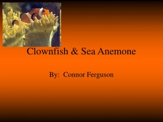 Clownfish & Sea Anemone