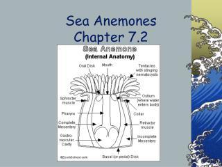Sea Anemones Chapter 7.2