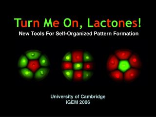 T u r n M e O n , L a c t o n e s ! New Tools For Self-Organized Pattern Formation
