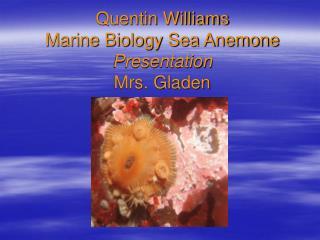 Quentin Williams Marine Biology Sea Anemone Presentation Mrs. Gladen