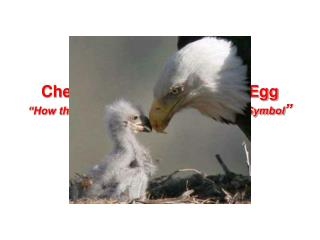 "Chester the Nester Laid an Egg ""How the Bald Eagle Became Our National Symbol """