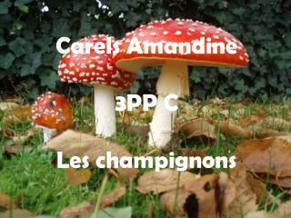 Carels  Amandine 3PP C  Les champignons