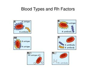 Blood Types and Rh Factors