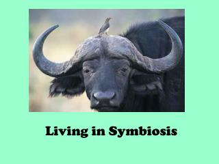 Living in Symbiosis