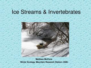 Ice Streams & Invertebrates