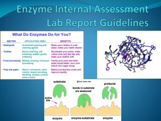 Enzyme Internal Assessment Lab Report Guidelines