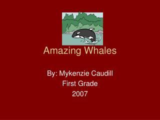 Amazing Whales