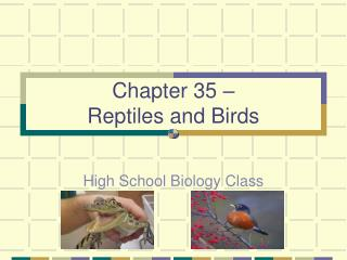 Chapter 35 –  Reptiles and Birds