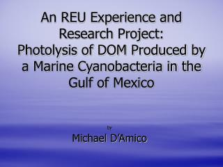 An REU Experience and  Research Project: