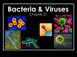 Bacteria & Viruses Chapter 21
